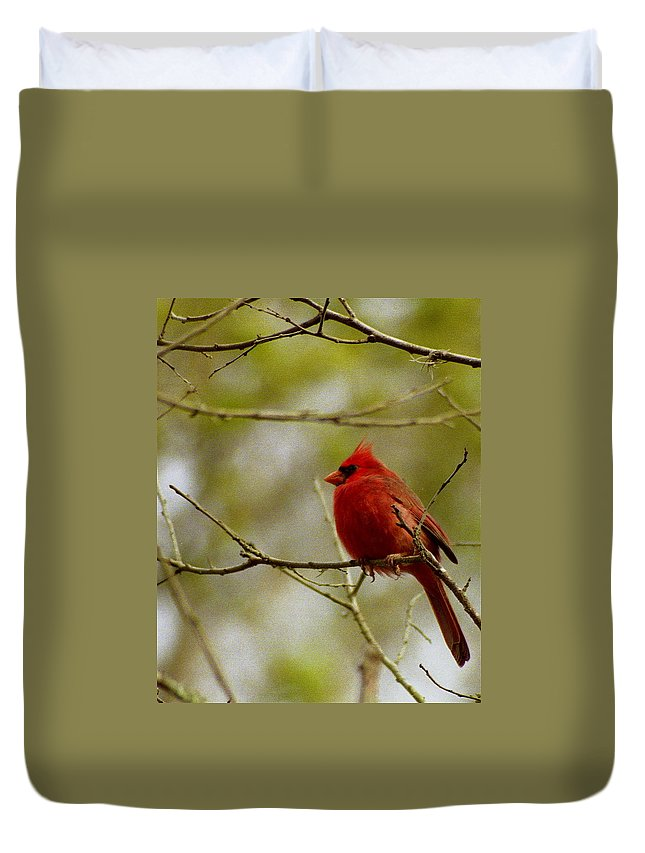 Male Duvet Cover featuring the photograph Male Cardnial by Michael Peychich