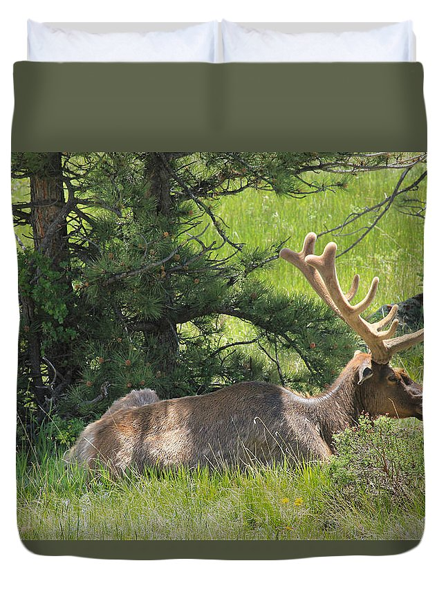Elk Duvet Cover featuring the photograph D10271-male Elk 2 by Ed Cooper Photography