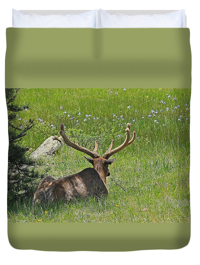 Elk Duvet Cover featuring the photograph D10270-male Elk by Ed Cooper Photography