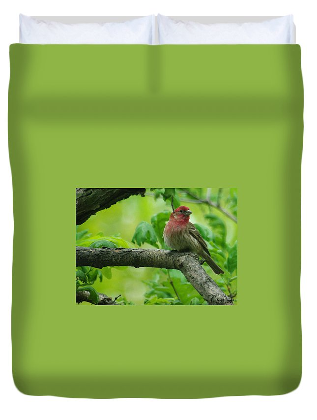 Jenny Gandert Duvet Cover featuring the photograph Male House Finch by Jenny Gandert