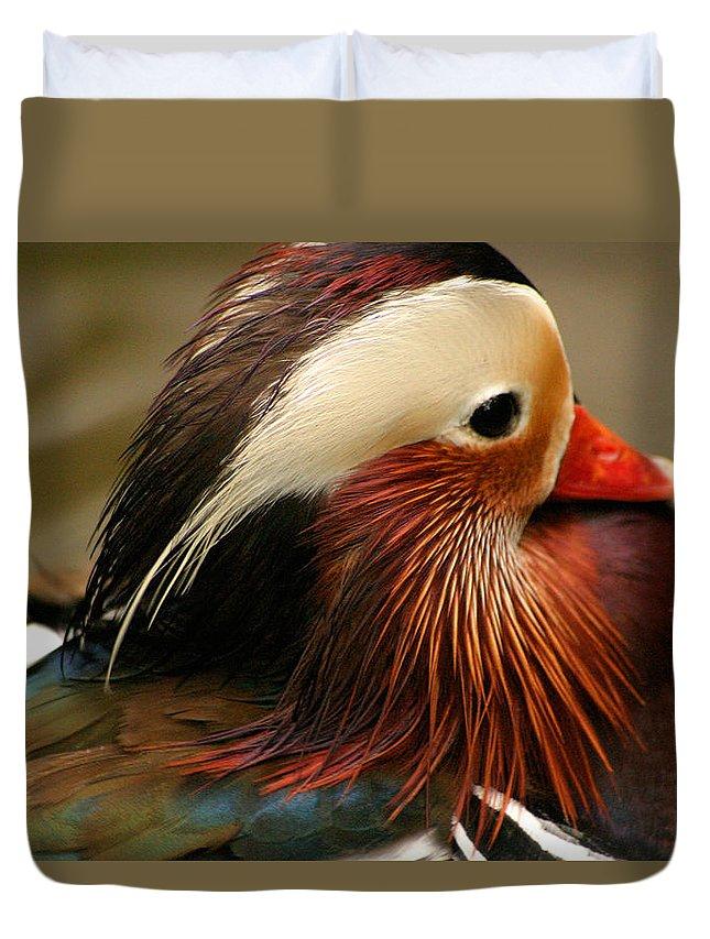 Mandarin Duck Duvet Cover featuring the photograph Male Mandarin Duck China by Ralph A Ledergerber-Photography