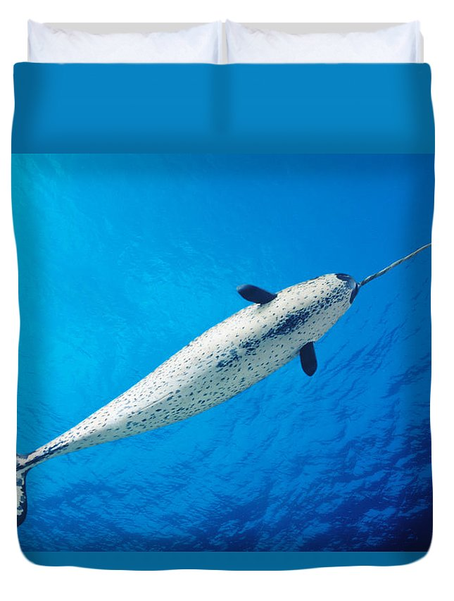 Aquatic Duvet Cover featuring the photograph Male Narwhal by Dave Fleetham - Printscapes
