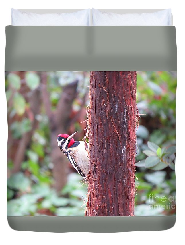 Yellow-bellied Sapsucker Duvet Cover featuring the photograph Male Yellow-bellied Sapsucker by Charles Green