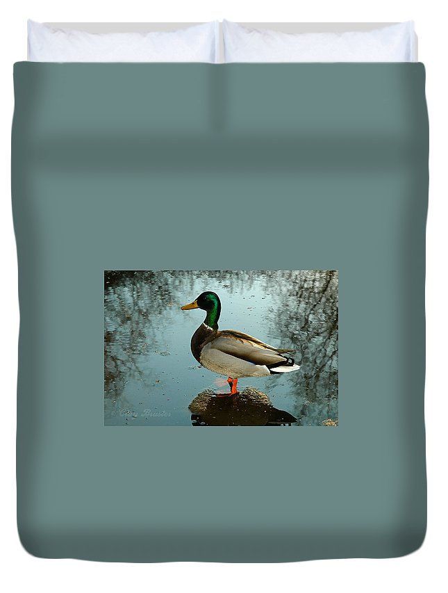 Clay Duvet Cover featuring the photograph Mallard by Clayton Bruster
