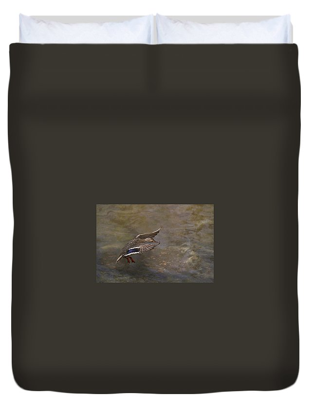 Mallard Duvet Cover featuring the photograph Mallard Landing On Thompson's Pond by Susan Williams
