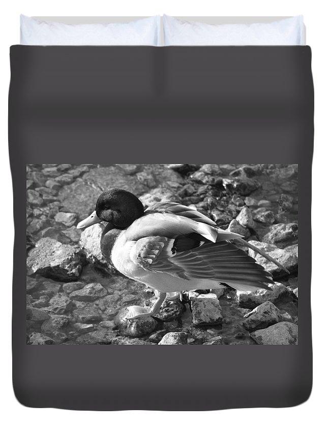 Duck Duvet Cover featuring the photograph Mallard by Lauri Novak