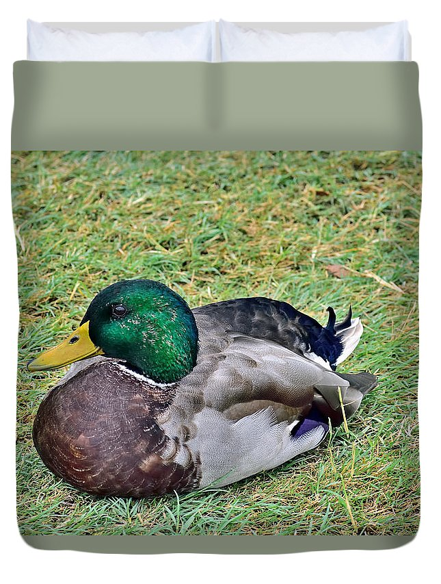 Mallard Duvet Cover featuring the photograph Mallard Resting by Robert Brown