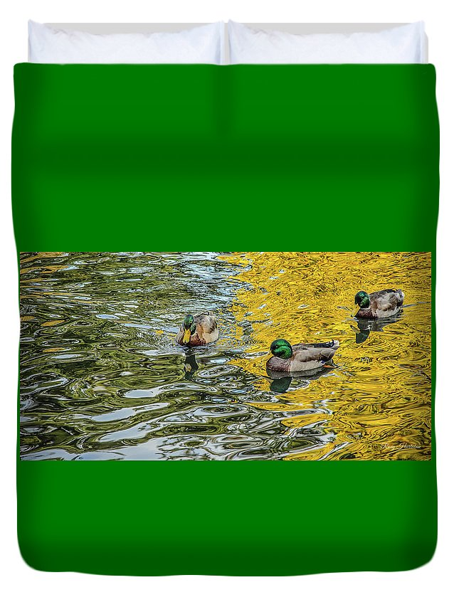 Drake Duvet Cover featuring the photograph Mallards On Golden Pond 3 by Roxy Hurtubise