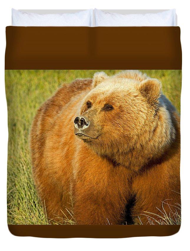 Bear Duvet Cover featuring the photograph Mama Bear by Shari Sommerfeld
