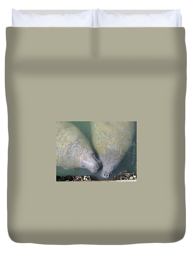 Manatees Duvet Cover featuring the photograph Mammoth Love by Rene Triay Photography
