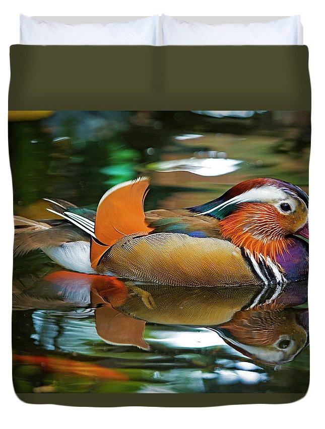 Duck Duvet Cover featuring the photograph Mandarin Duck by Julian Regan