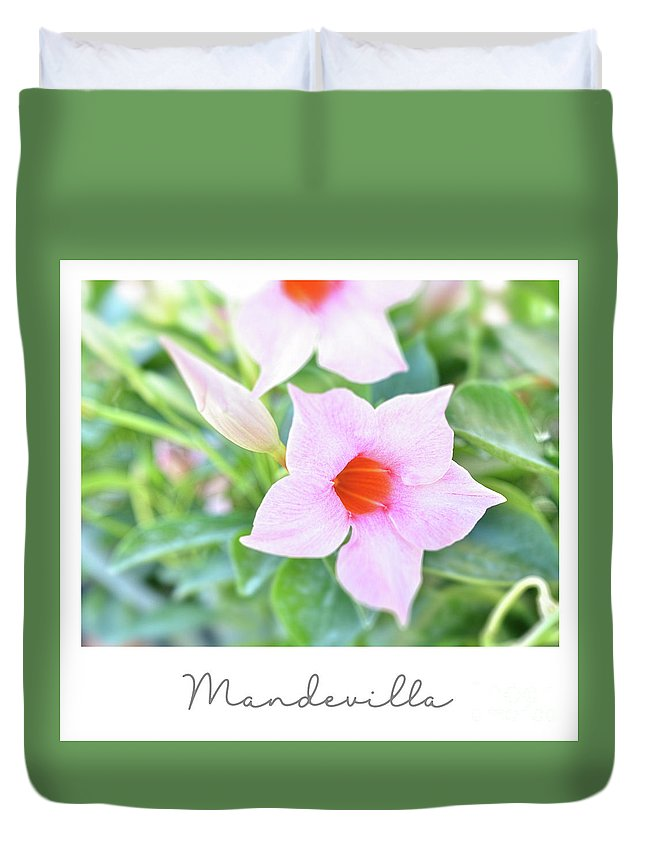 Mandevilla Duvet Cover featuring the photograph Mandevilla Pink Beauty by Elaine MacKenzie