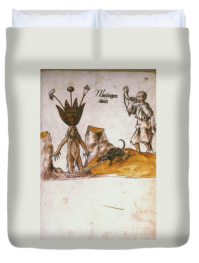 1500 Duvet Cover featuring the photograph Mandrake, C1500 by Granger