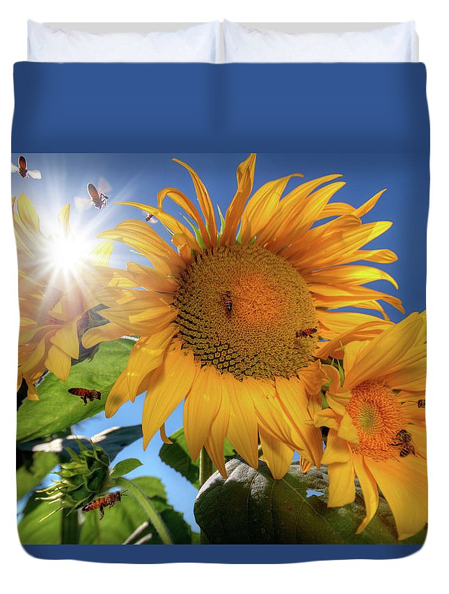 Color Duvet Cover featuring the photograph Many Bees Flying Around Sunflowers by William Freebilly photography