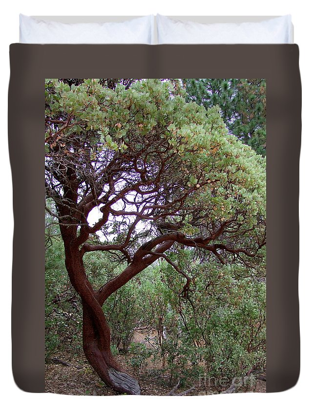 Manzanita Tree Duvet Cover featuring the photograph Manzanita Tree By The Road by Mary Deal