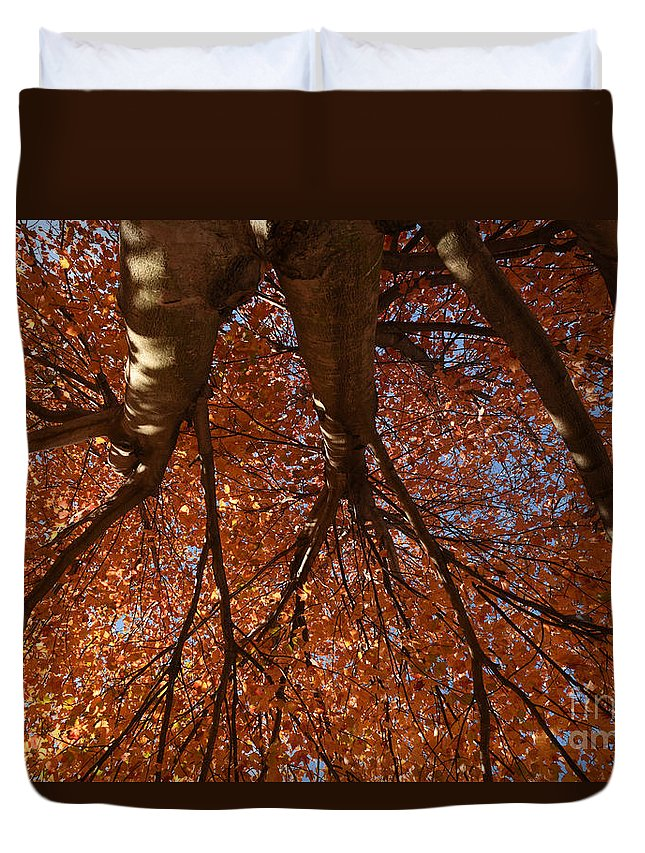 Maple Duvet Cover featuring the photograph Maple Dreaming by Charles Owens