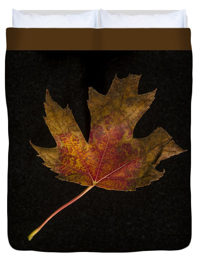 Leaf Duvet Cover featuring the photograph Maple Leaf by David Stone