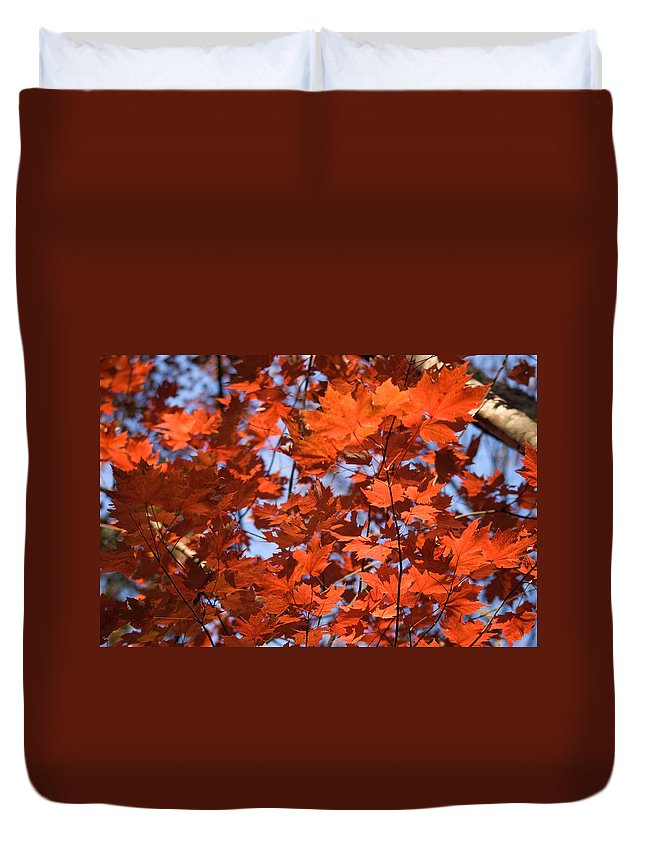 Maple Duvet Cover featuring the photograph Maple Leaves Aglow by Douglas Barnett
