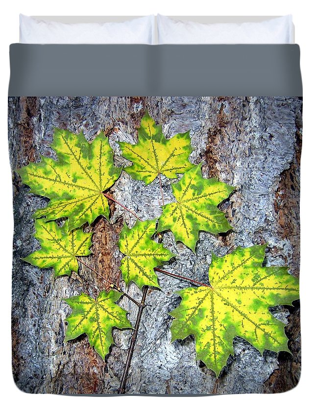 Autumn Duvet Cover featuring the photograph Maple Mania 12 by Will Borden