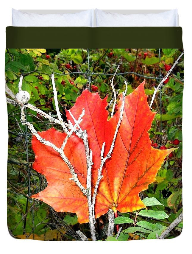 Autumn Duvet Cover featuring the photograph Maple Mania 6 by Will Borden