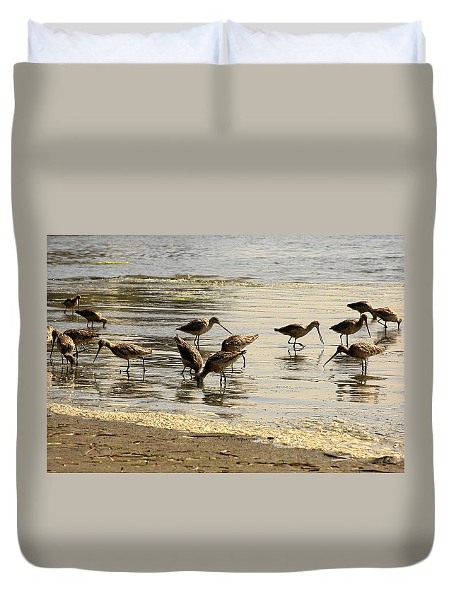 Seabirds.shorebirds.marbled Godwit Duvet Cover featuring the photograph Marbled Godwit Birds At Sunset by Christine Till