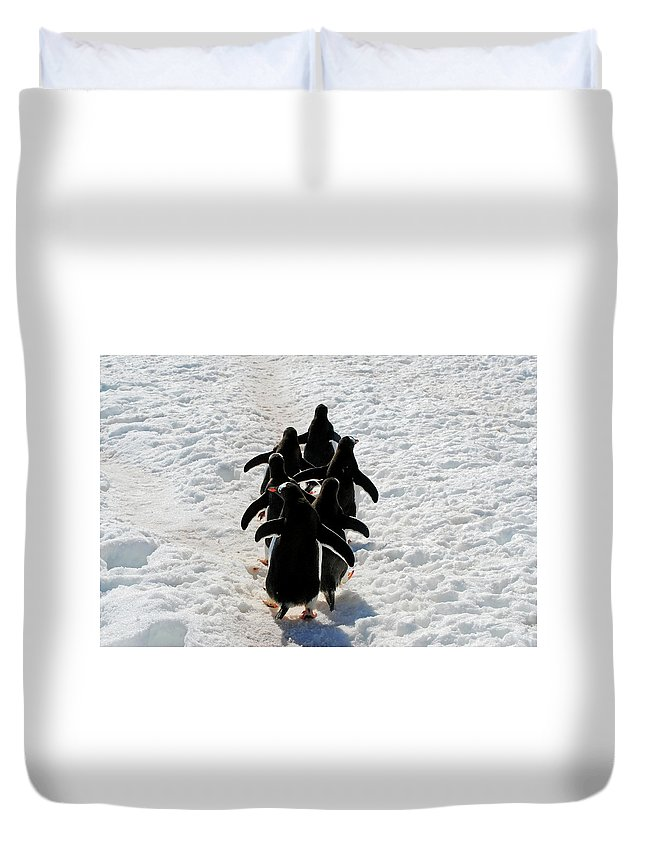 Antarctica Duvet Cover featuring the photograph March Of Penguins by Gabriel Jardim