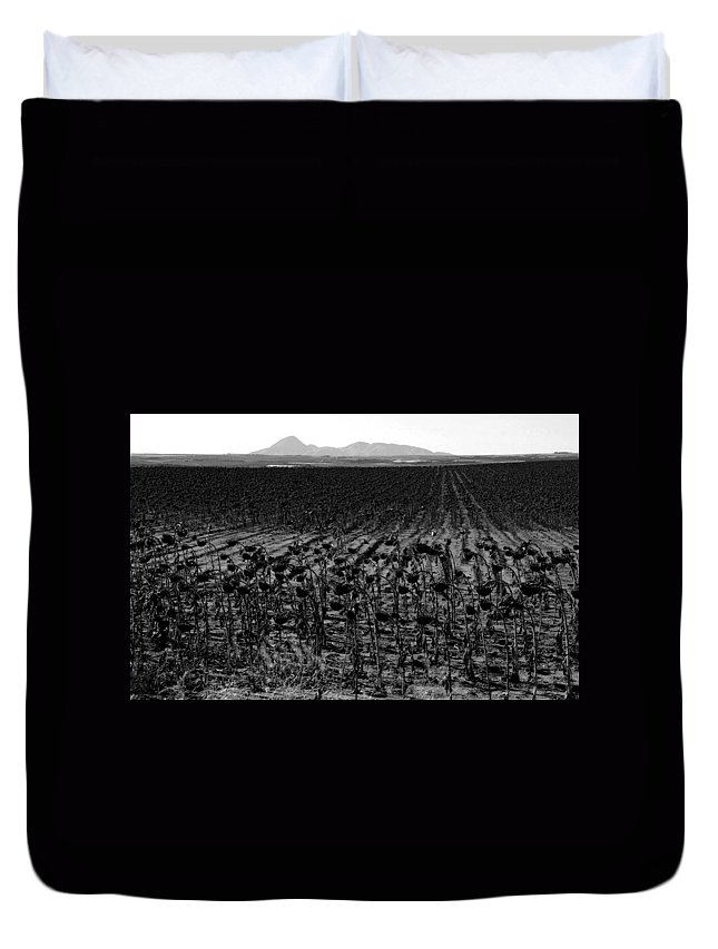 Sunflowers Duvet Cover featuring the photograph March Of The Sunflowers by David Lee Thompson