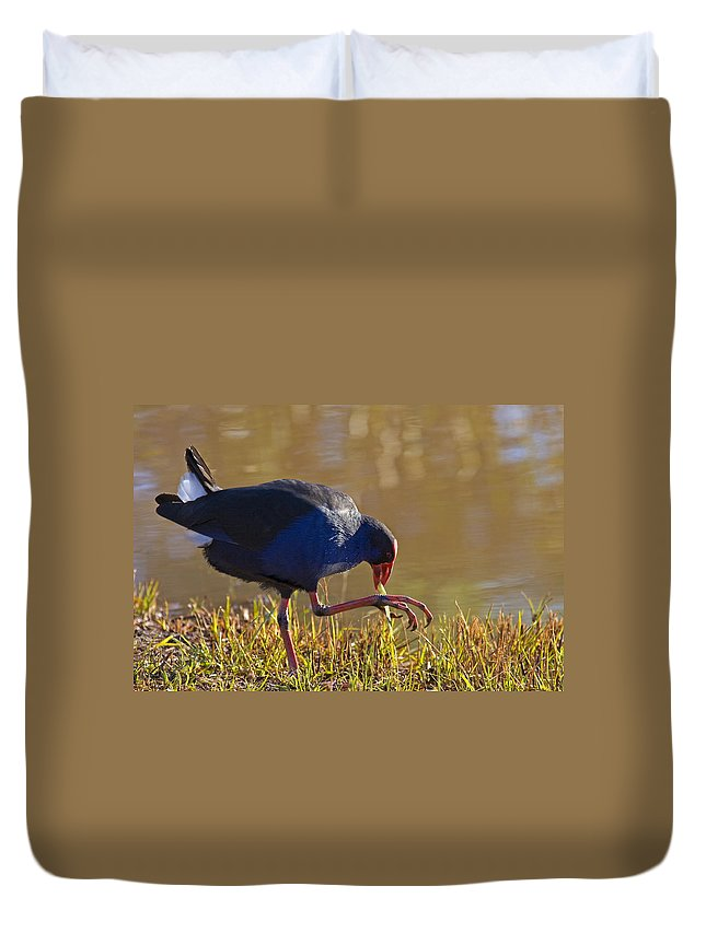 Purple Duvet Cover featuring the photograph March Of The Swamphen by Mike Dawson