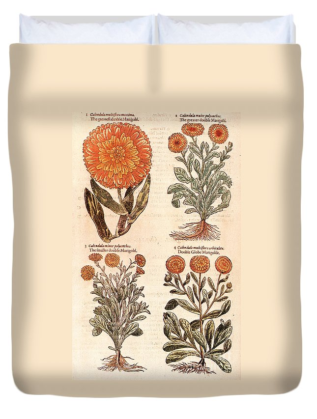 1597 Duvet Cover featuring the photograph Marigolds by Granger