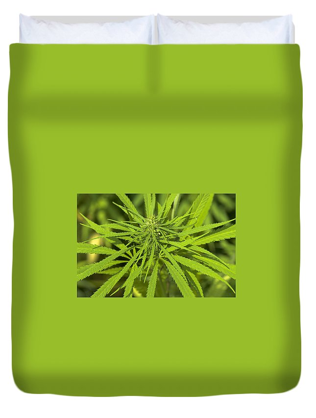 Marihuana Duvet Cover featuring the photograph Marihuana by Michael Mogensen
