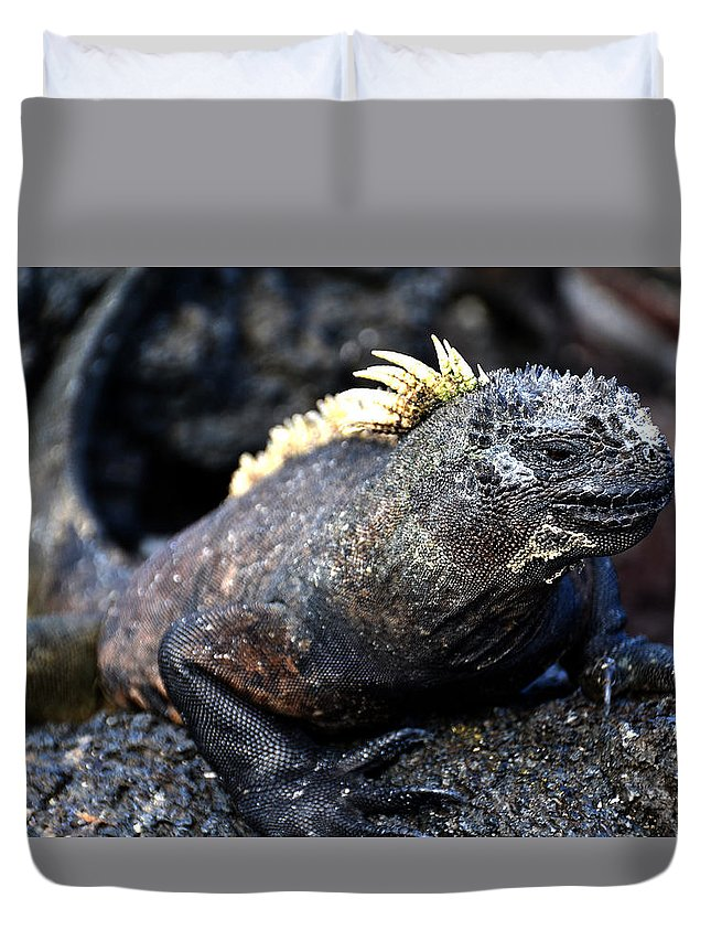 Galapagos Duvet Cover featuring the photograph Marine Iguana On The Rock by Harry Coburn