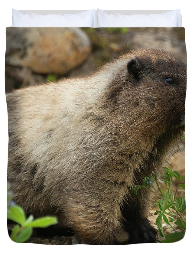 Marmot Duvet Covers