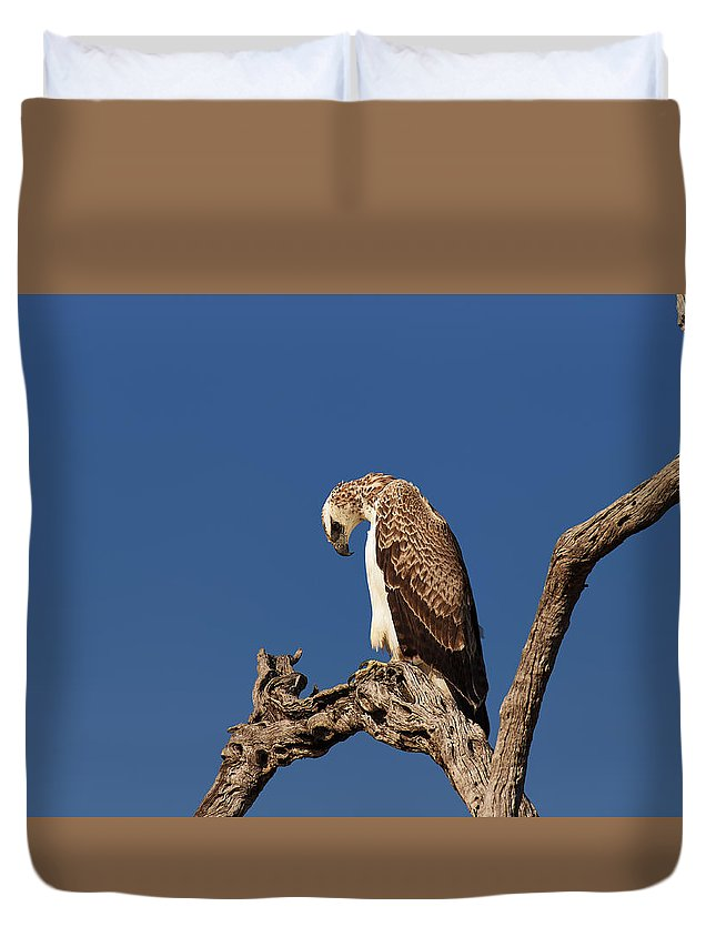 Martial Duvet Cover featuring the photograph Martial Eagle by Johan Swanepoel