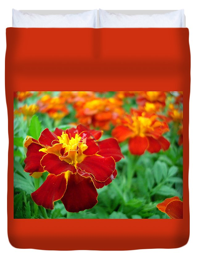 Marigold Duvet Cover featuring the photograph Mary Gold by Kathy Bucari