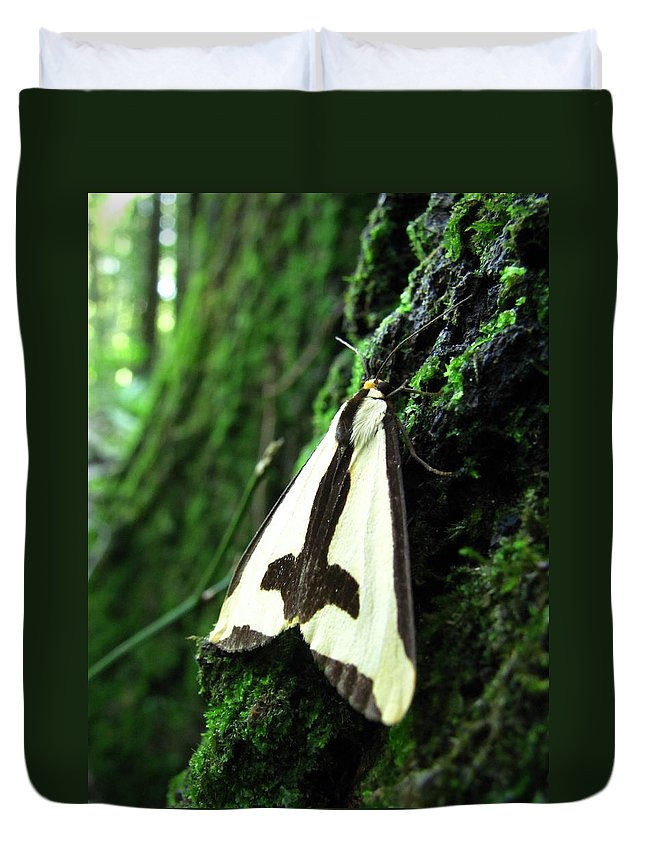 Maryland Clymene Moth Images Old Growth Forest Ecosystem Bowleys Quarters Clymene Moth Photograph Prints Biodiversity Nature Mature Forest Ecology Moths Of Maryland Forest Complexity Insect Diversity Forest Life In The Trees Duvet Cover featuring the photograph Maryland Clymene Moth by Joshua Bales