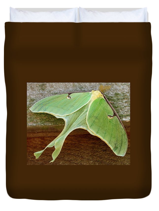 Maryland Luna Moth Images Giant Green Moth Images Luna Moth Photo Prints Entomology Forest Ecology Biodiversity Nature Big Green Moth Pictures Green Moth Photograph Prints Giant Green Moths Large Green Moths Images Nature Photography Naturalist Star Creatures Wildlife Habitat Conservation Oldgrowth Forest Protection Stop Sprawl Rare Prints Rare Moths Botany Horticulture Garden Insects Colorful Critter Prints Giant Green Moth Images Maryland Moth Identification Images Nature Prints Wild Prints Duvet Cover featuring the photograph Maryland Luna Moth by Joshua Bales