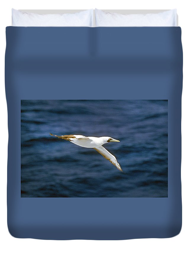Masked Booby Duvet Cover featuring the photograph Masked Booby by Buddy Mays