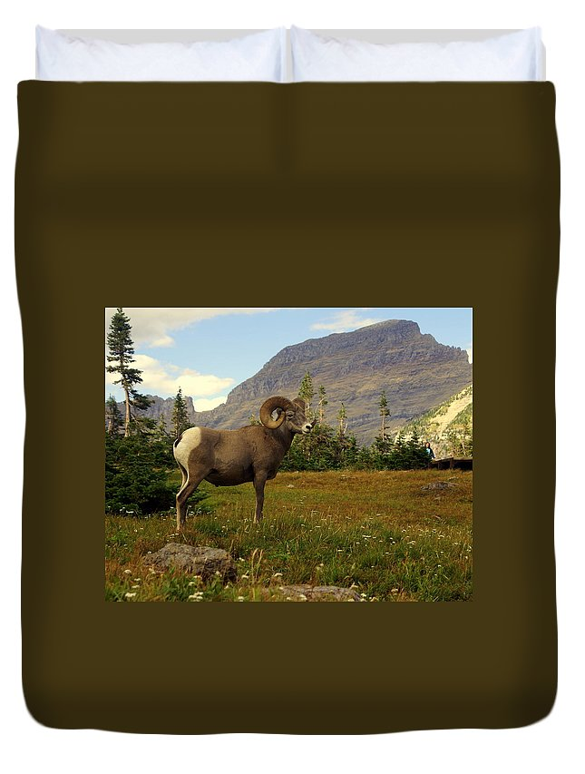 Big Horn Sheep Duvet Cover featuring the photograph Master Of His Domain by Marty Koch