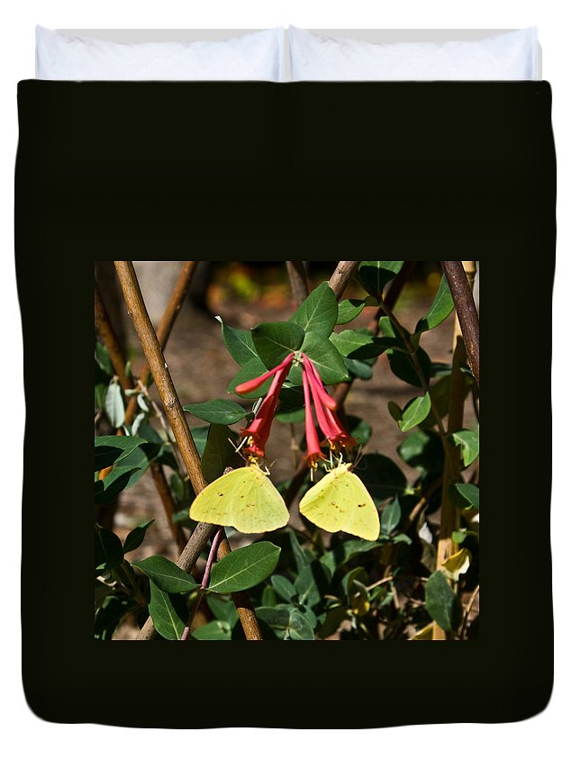 Sulfur Duvet Cover featuring the photograph Matched Pair Of Sulfur Butterflies by Douglas Barnett