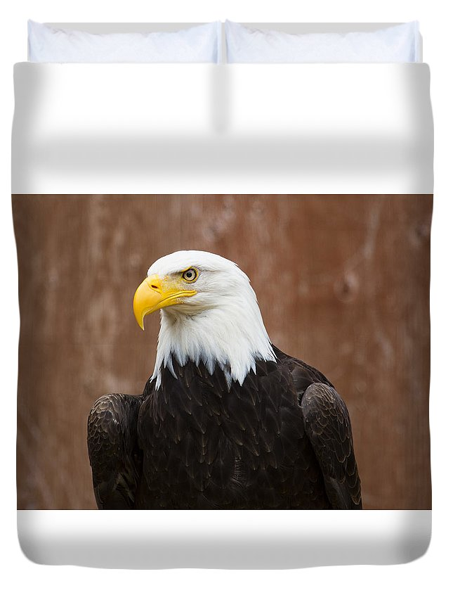 Eagle Duvet Cover featuring the photograph Mature Adult Bald Eagle by Richard Lee