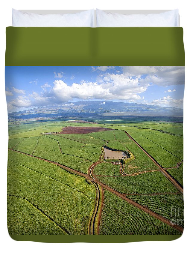 Above Duvet Cover featuring the photograph Maui Sugar Cane by Ron Dahlquist - Printscapes