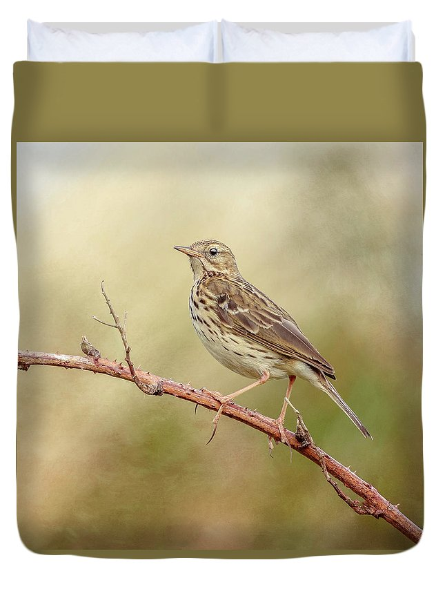 Meadow Pipit Duvet Cover featuring the photograph Meadow Pipit by Roy McPeak