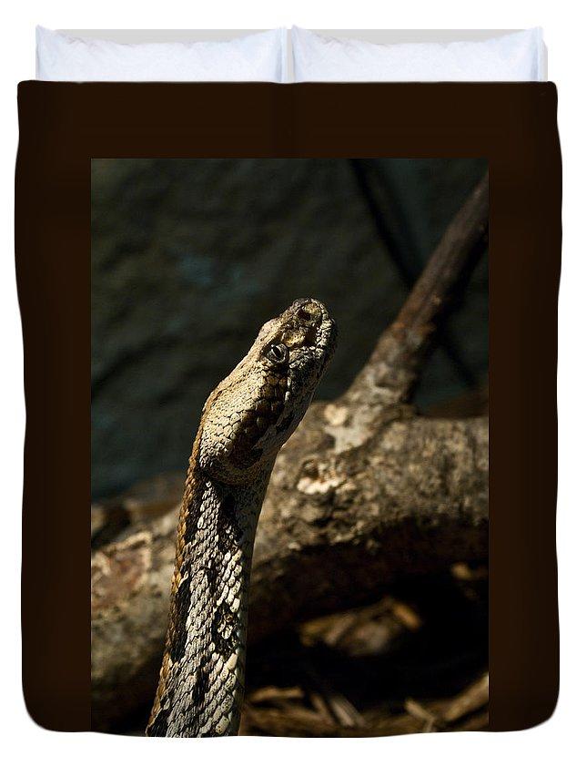 Snake Duvet Cover featuring the photograph Mean Poisonous Snake by Douglas Barnett