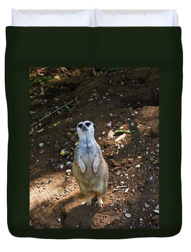 Meerkat Duvet Cover featuring the photograph Meerkat Poising by Douglas Barnett
