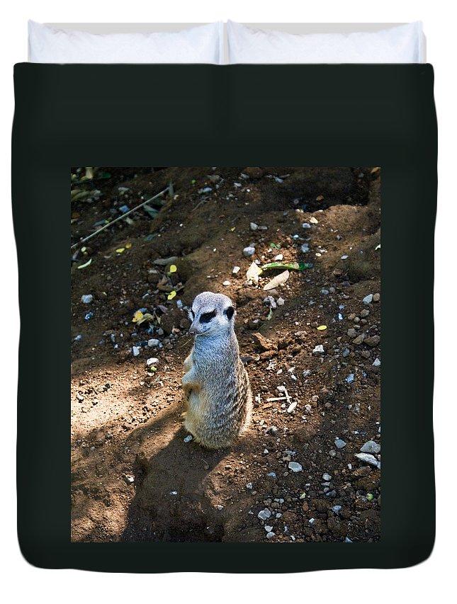 Meerkat Duvet Cover featuring the photograph Meerkat Spying On Neighbors by Douglas Barnett