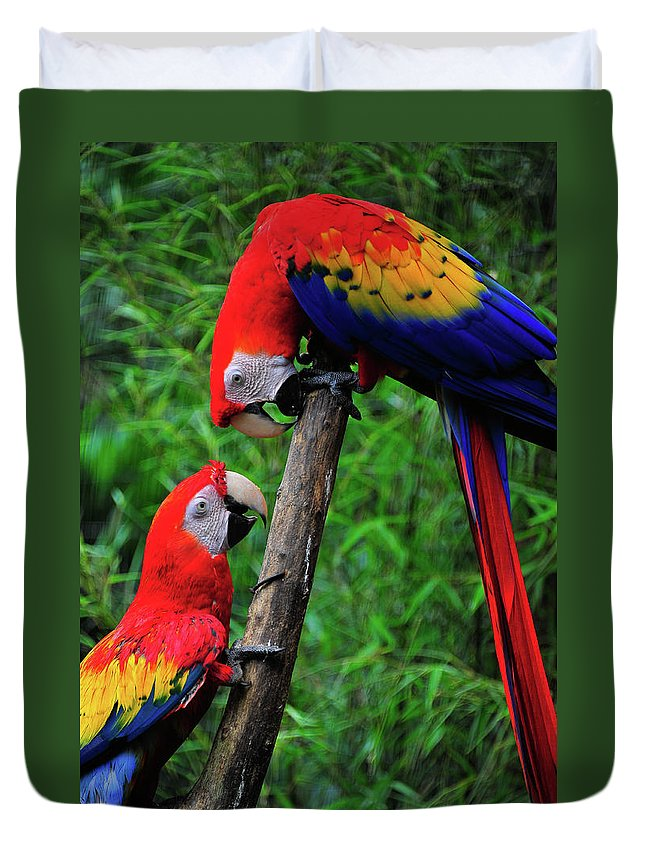 Bird Photographs Duvet Cover featuring the photograph Meeting Of The Macaws by Harry Spitz