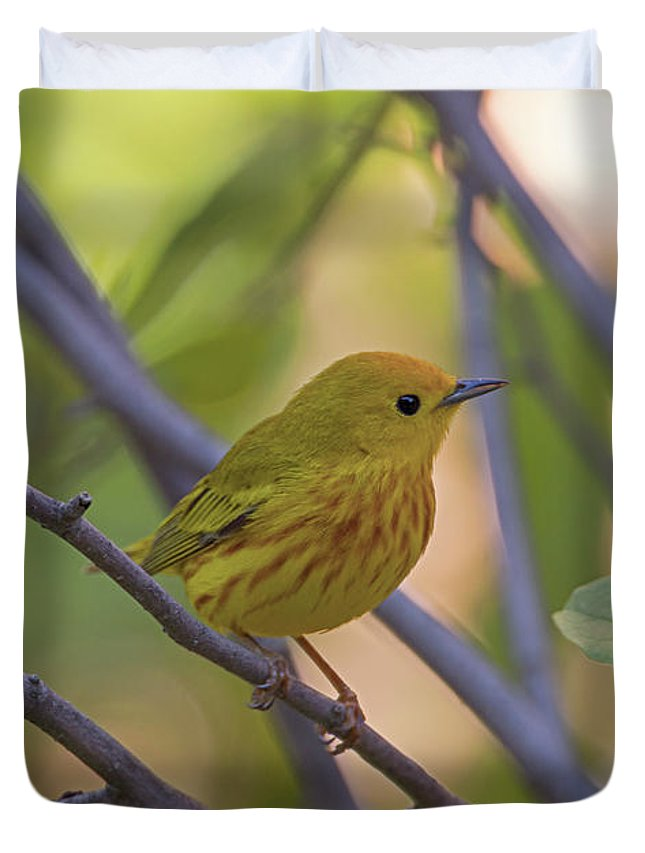 Yellow Warbler Duvet Cover featuring the photograph Mellow Yellow - American Warbler - Setophaga Petechia by Spencer Bush
