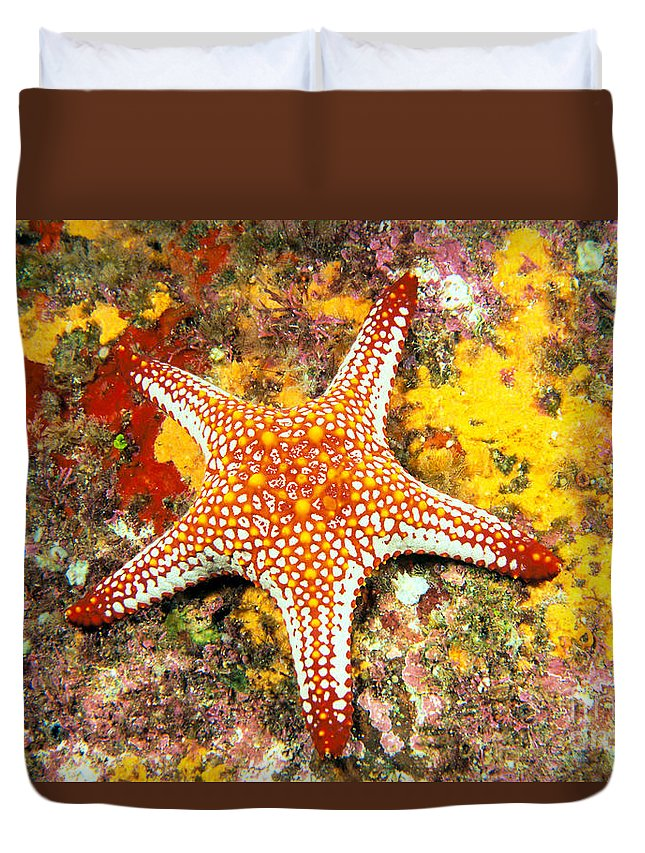 Animal Art Duvet Cover featuring the photograph Mexico, Gulf Sea Star by Dave Fleetham - Printscapes