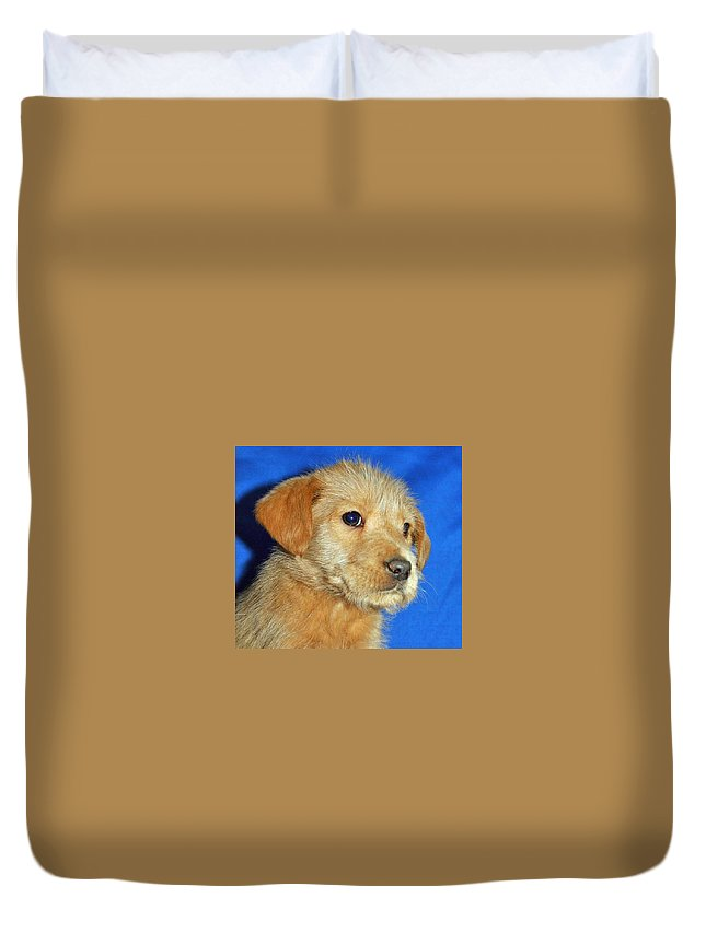 Dog Duvet Cover featuring the photograph Michael Portrait by Eric Liller