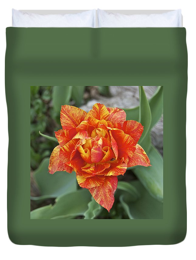 Tulip.hybrid Duvet Cover featuring the photograph Mike's Hybrid Tulip by Michael Peychich